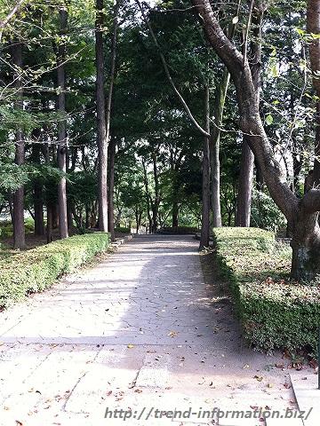 上尾丸山公園の雑木林