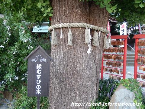 川越八幡宮の夫婦イチョウの木