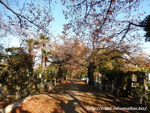 青山霊園の紅葉の風景